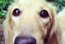 Golden Retrievers Are MAGIC! / And I'd like one please.