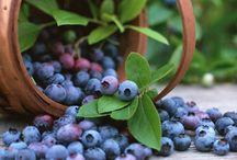 manfaat buah blubebrry