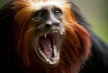 Animals   Primates