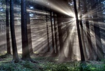 Daylight in Nature