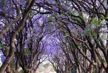 Trees- árvores