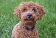 Puppy Love / My puppy!