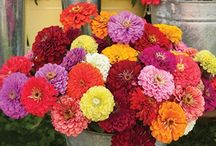Cut Flowers / Johnny's research team carefully trials and selects the most reliable, productive, and beautiful cut-flower varieties available.