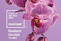 Radiant Orchid 2014 / Color of the year!