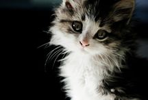 Must Love Cats / Gorgeous cat pics