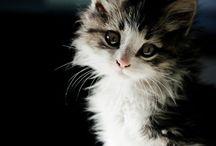 Must Love Cats / Gorgeous cat pics