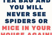 Get rid of mice n spiders