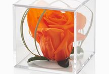Timesless Rose Cube Gifts / A range of timeless rose cube gifts. Perfect for every occasion and supplied in a wonderful presentation bix
