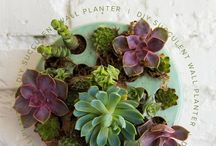 plant it / Inspiring ways to bring more plants into your life.
