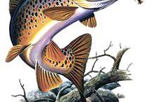 Ryby a voda