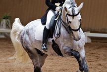 Lipizzaner horses ˇ ˇ