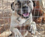 ADOZIONI CANI DI RAZZA / Adozione Cani di razza