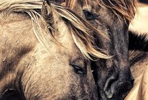 Horses / by Millie Abplanalp