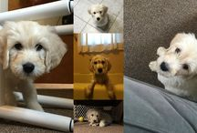 Dogs of MHE / At McGraw-Hill Education, we're crazy about our four-legged friends. Here are some of the #DogsOfMHE.
