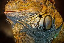 P E T S. reptiles