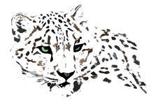 lionness and snow leopards