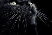Negro / by Danifotografo