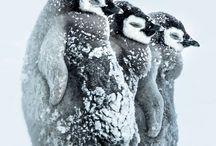 REISEN Eis und Schnee