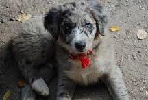 Puppies / by Amanda Taylor