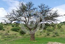 Africa nature