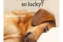 .....DOG QUOTES......