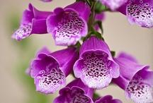 Flowers / by Roberta Eldridge
