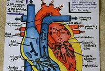 Cardiovascular System Project / by Carrie Lear