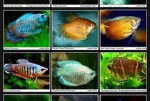 Rodziny ryb akwariowych