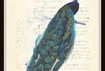 Pretty as a peacock / by Dawn Stanley