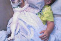Cute Animals || Kachy TV