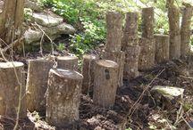 Shittake mushroom log growing