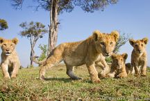 Endangered Animals / by Always Outbound Travel