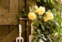 Zahrada,květiny