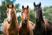 Heigh Ho Horses / We're inspired by horses and owners who diligently keep them healthy by reducing the ammonia concentration levels in their stalls and trailers.
