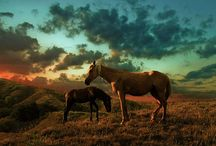 Photography / Beautiful and Inspiring Horse Photography