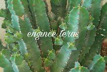 my cactus & suculents
