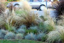 Grasses / by Richard Rock