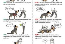 Dog / Training, snack diy, accessories