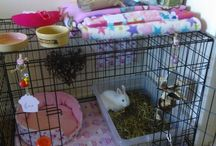 Guinea pig holiday care