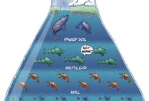 Zoology infografic