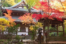 Temple (& Architecture) of Japan / by AllAboutJapan