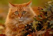 Cats in Autumn and a few other friends