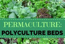 Garden Permaculture / Links to permaculture techniques and methods.