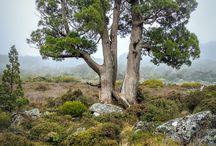 __drzewa_zielen