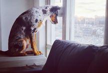 Puppy Love xoxo