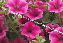 Beginner Gardening