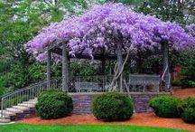 Ideias ecológicas que aprovo / gardening