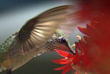 Hummingbirds / by Angie K. Tolison