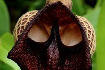 außergewöhnliche Pflanzen