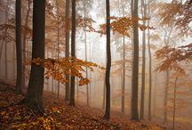 Czech Republic / Landscape images from the Czech Republic